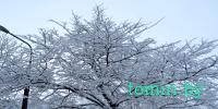Брест, Набережная, 21 января 2012 года