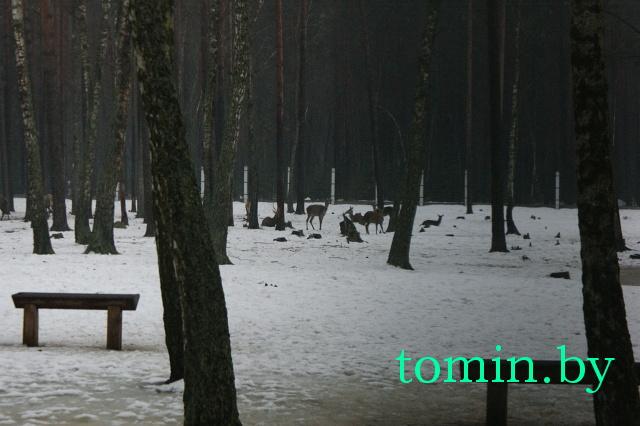 Вольеры с животными в Беловежской пуще. Фото Тамары ТИБОРОВСКОЙ