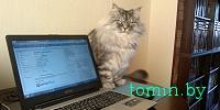 Kот Тишка покоряет интернет (фото)