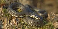 В Бресте появились змеи, напугавшие горожан