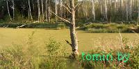 Столинские спасатели снимали с дерева минчанина, забредшего в болото: подробности путешествия со слов туриста