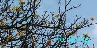 Брест, 22 сентября. На проспекте Машерова цветет каштан - фото