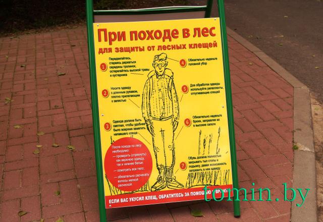 Как одеваться при походе в лес, чтобы не пострадать от укусов клещей - фото