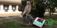 В Бресте у детской городской библиотеки «поселилась» сова - фото