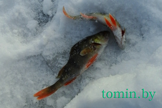 зимняя рыбалка магнитогорск