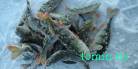 Особенности зимней рыбалки на заливе за гребным каналом в Гомеле