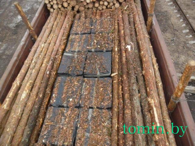 Брестские пограничники задержали в вагоне с сосновыми бревнами 92 короба сигарет - фото