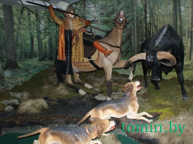 Национальный парк «Беловежская пуща». Музей природы. Фото Тамары ТИБОРОВСКОЙ